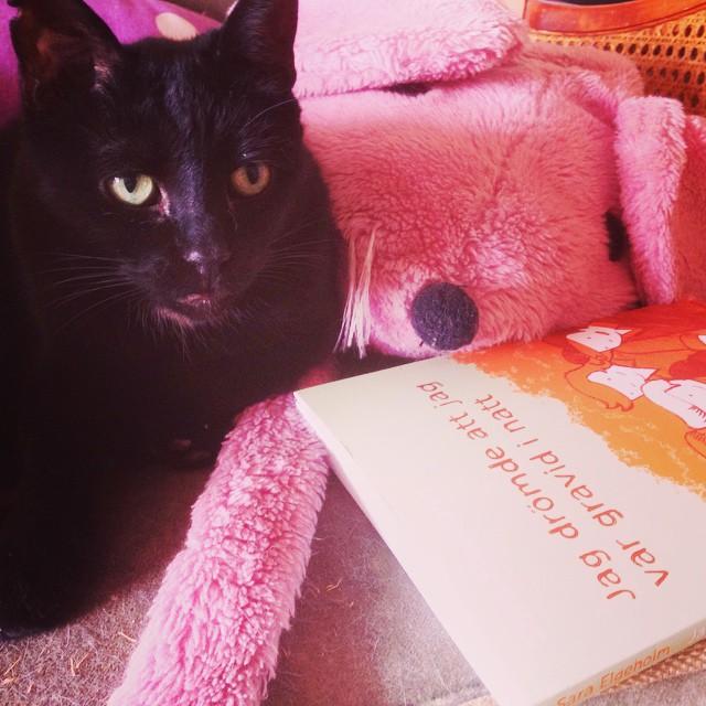 """Instagram media by litteraturmagazinet - Läser just nu: seriealbumet """"Jag drömde att jag var gravid i natt"""" av Sara Elgeholm #serier #katter #läsning / #seb_lm"""