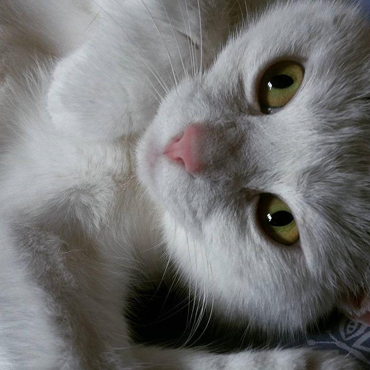 Dagens galning #katt #pose #kattliv #grönögd