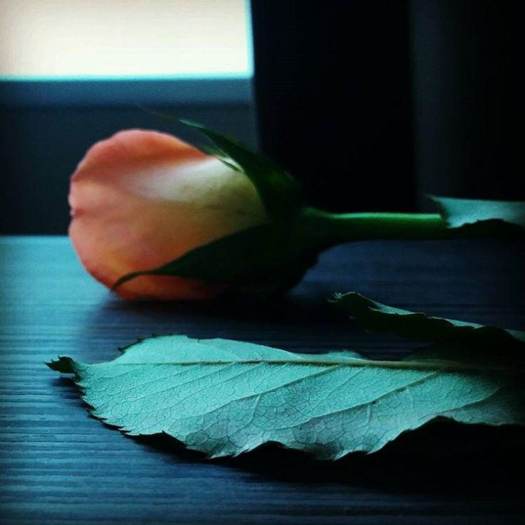 Ros i hotellrum #vardagskonst #rosor